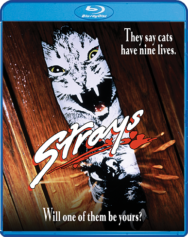 Strays_BR_Cover_72dpi.png